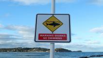 سمكة قرش تقتل راكب أمواج في أستراليا- غيتي