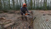قطع أشجار/مجتمع (جان فرانسوا مونيير/ فرانس برس)