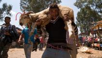 أضاحي المغرب- فرانس برس