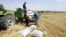 تونس/اقتصاد/زراعة تونس/13-01-2016 (فرانس برس)