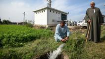 الزراعة في مصر MOHAMED EL-SHAHED/AFP