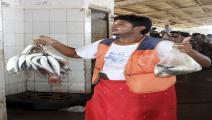 أسماك اليمن (فرانس برس)