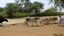 ثروة حيوانية السودان (أشرف شاذلي/فرانس برس)