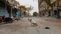 الكلاب الضالة/ غيتي/ مجتمع