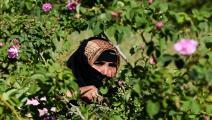 زراعة المغرب (فاضل سنا/فرانس برس)