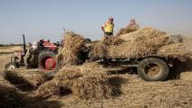 الدعم مخصص للقطاع الزراعي في الغور (فرانس برس)