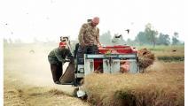 غرامات هائلة فرضتها السلطات على مزارعي الأرز (فرانس برس)