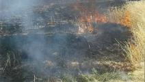 النار تلتهم حقول القمح السورية (فيسبوك)