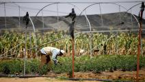 زراعة الصومال (الأناضول)