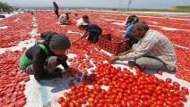 الزراعة في تركيا-زراعة تركيا-أسواق تركيا-14-12-الأناضول