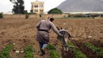 زراعة اليمن (محمد حمود/الأناضول)