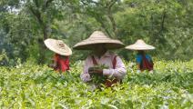 سوق الشاي - القسم الثقافي