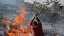 مستوطنون أشعلوا النار بأشجار الزيتون الفلسطيني(جعفر إشتيه/فرانس برس)