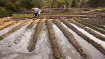 زراعة الجزائر (Getty)