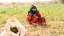 زراعة في اليمن/ فرانس برس