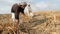 العراق/اقتصاد/الزراعة في العراق (جفاف)/29-01-2016 (فرانس برس)