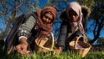 الزراعة المغربية تحتاج إلى كثير من الدعم (فرانس برس)