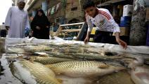 سمك العراق فرانس برس
