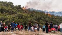 حريق في غابة في تونس - مجتمع
