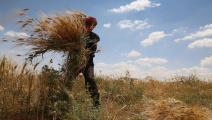 القمح في سورية-اقتصاد-5-6-2016 (Getty)