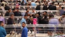 صيد الطيور في غزة 1/مجتمع (محمد الحجار)