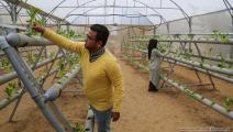 عازم وصفية أبو دقة في غزة 1 - مجتمع