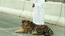 تحقيق تجارة الحيوانات المفترسة في قطر