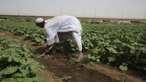 الزراعة في السودان-اقتصاد-5-4-2017(أشرف شاذلي/فرانس برس)