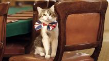 القط لاري - منوعات