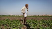 مصر/اقتصاد/زراعة مصر/30-12-2015 (Getty)