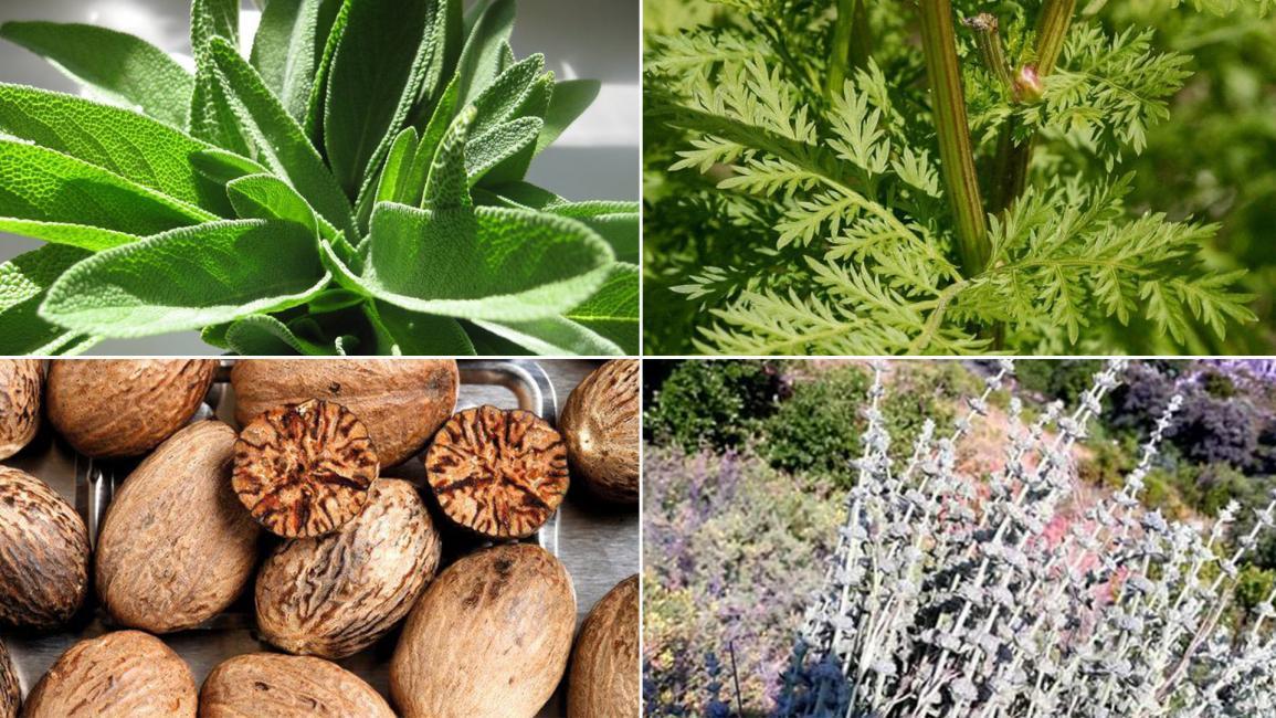 4 أعشاب تتناولها باستمرار تحتوي مواد مهلوسة