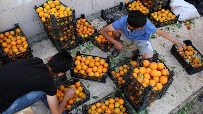 سورية: التصدير وتراجع الإنتاج يرفعان أسعار الحمضيات