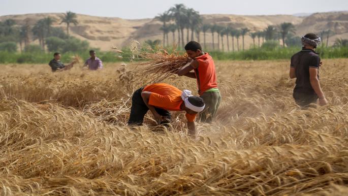 زيادة طفيفة في سعر توريد القمح تثير غضب مزارعي مصر